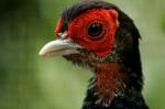 Bird-Writing good blog leads in 50 words
